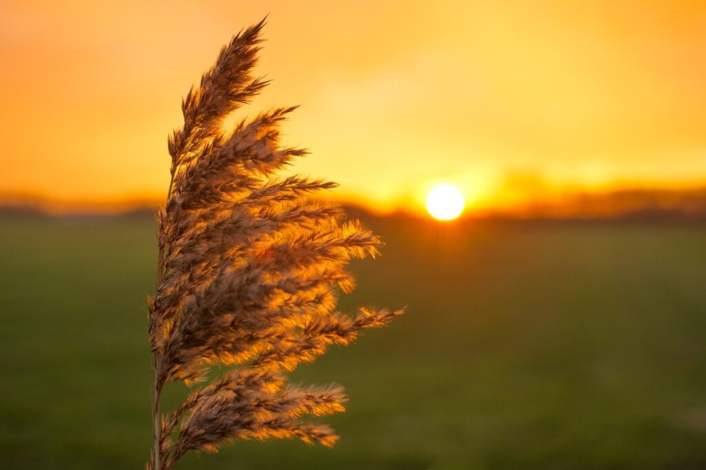 plume, sunset, yellow-1930518.jpg